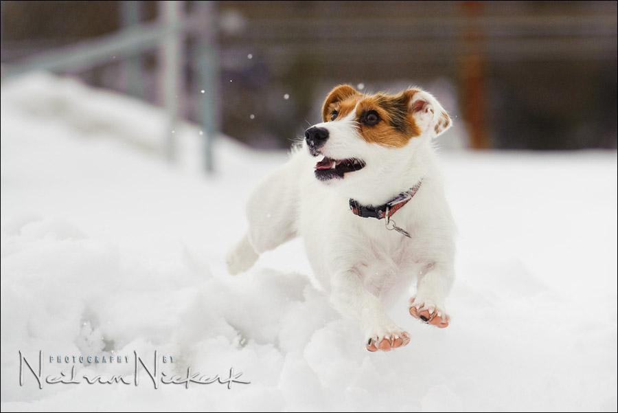 photo-session with Sundae – white on white